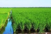 arroz-580x386