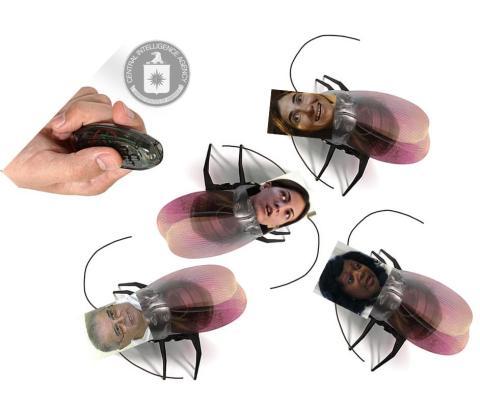 cucarachas disidente