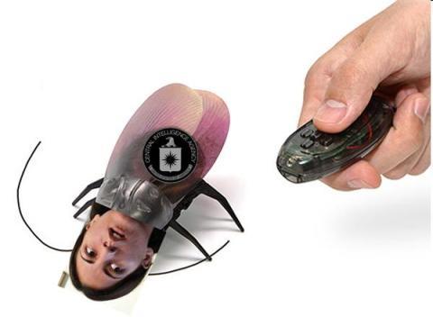cucaracha disidente